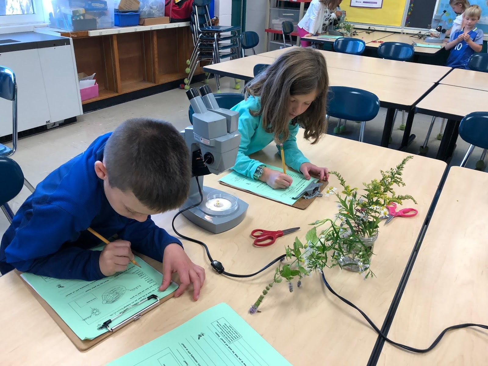 2nd graders study flower pollination